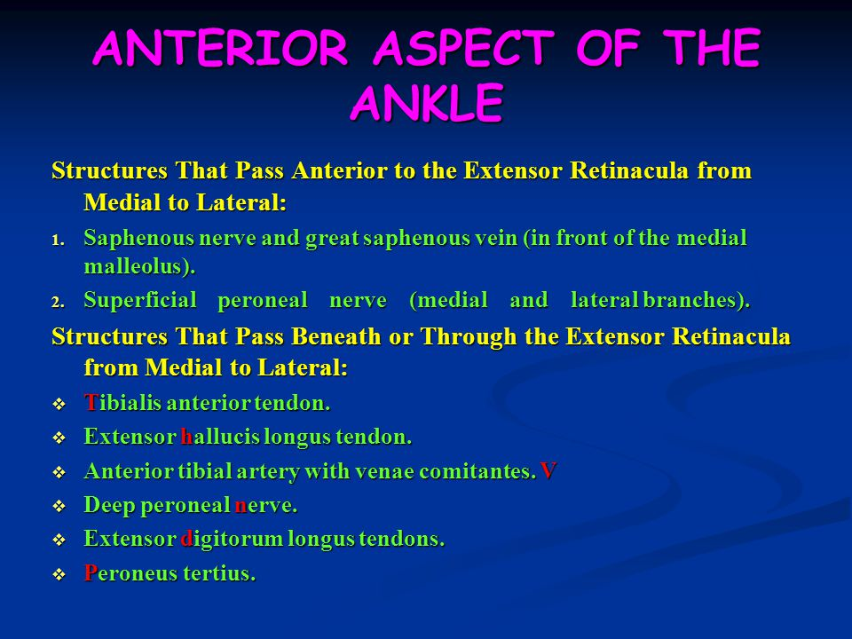 ANTERIOR ASPECT OF THE ANKLE