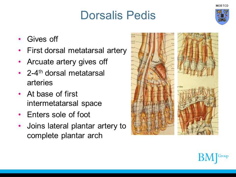 Dorsalis Pedis Gives off First dorsal metatarsal artery