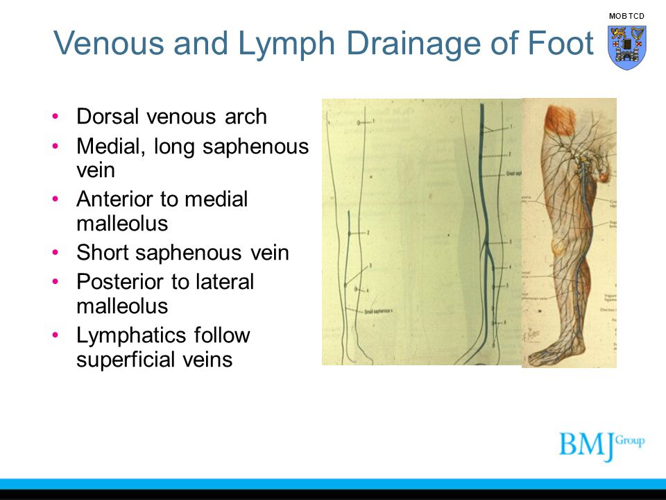 Venous and Lymph Drainage of Foot