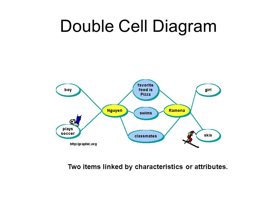 Double Cell Diagram Two items linked by characteristics or attributes.