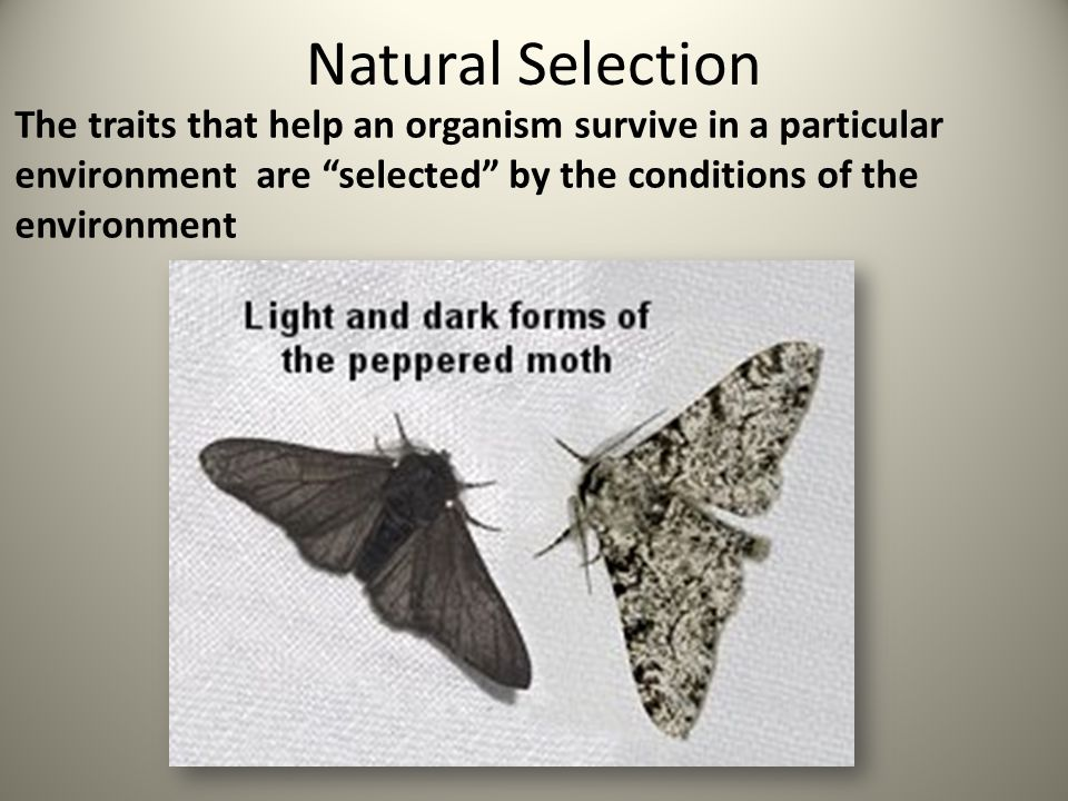 Natural Selection The traits that help an organism survive in a particular environment are selected by the conditions of the environment.