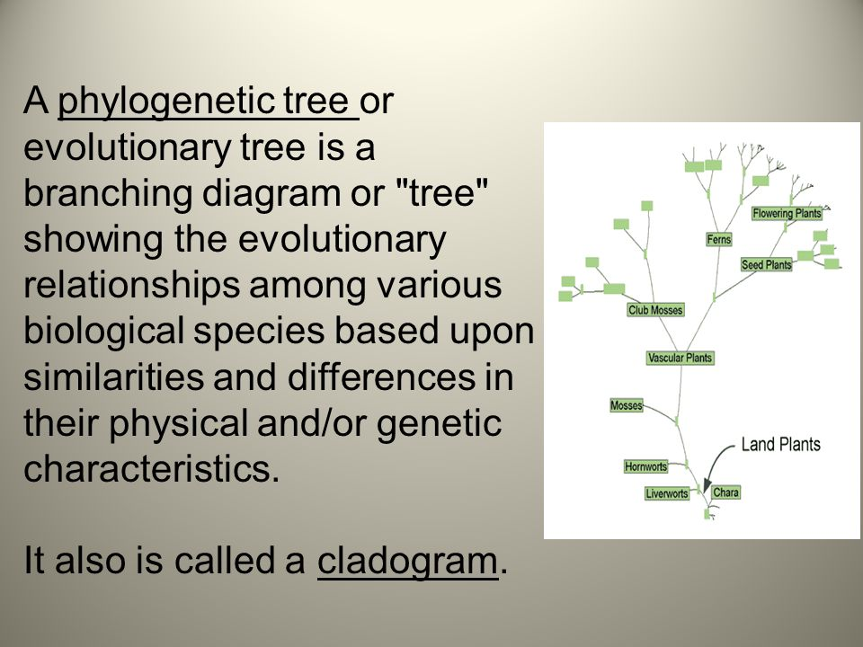 A phylogenetic tree or evolutionary tree is a branching diagram or tree showing the evolutionary relationships among various biological species based upon similarities and differences in their physical and/or genetic characteristics.