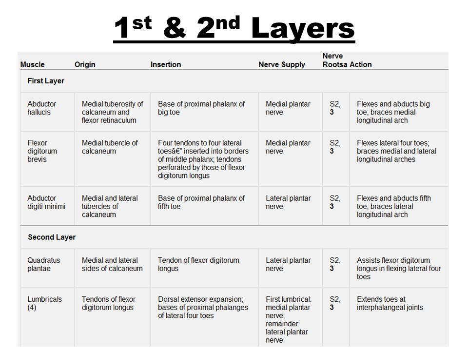 1st & 2nd Layers