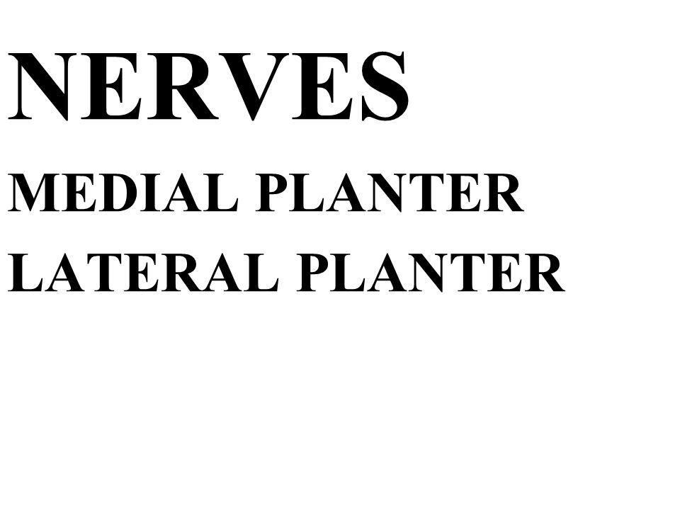 NERVES MEDIAL PLANTER LATERAL PLANTER