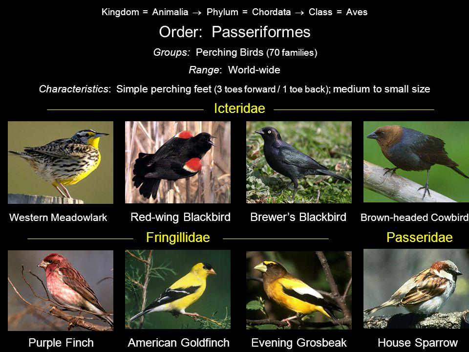 Order: Passeriformes Icteridae Fringillidae Passeridae