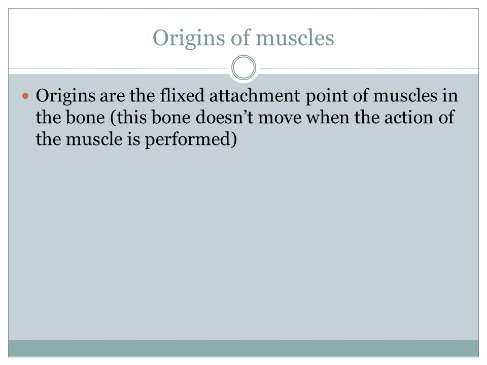 Origins of muscles Origins are the flixed attachment point of muscles in the bone (this bone doesn't move when the action of the muscle is performed)