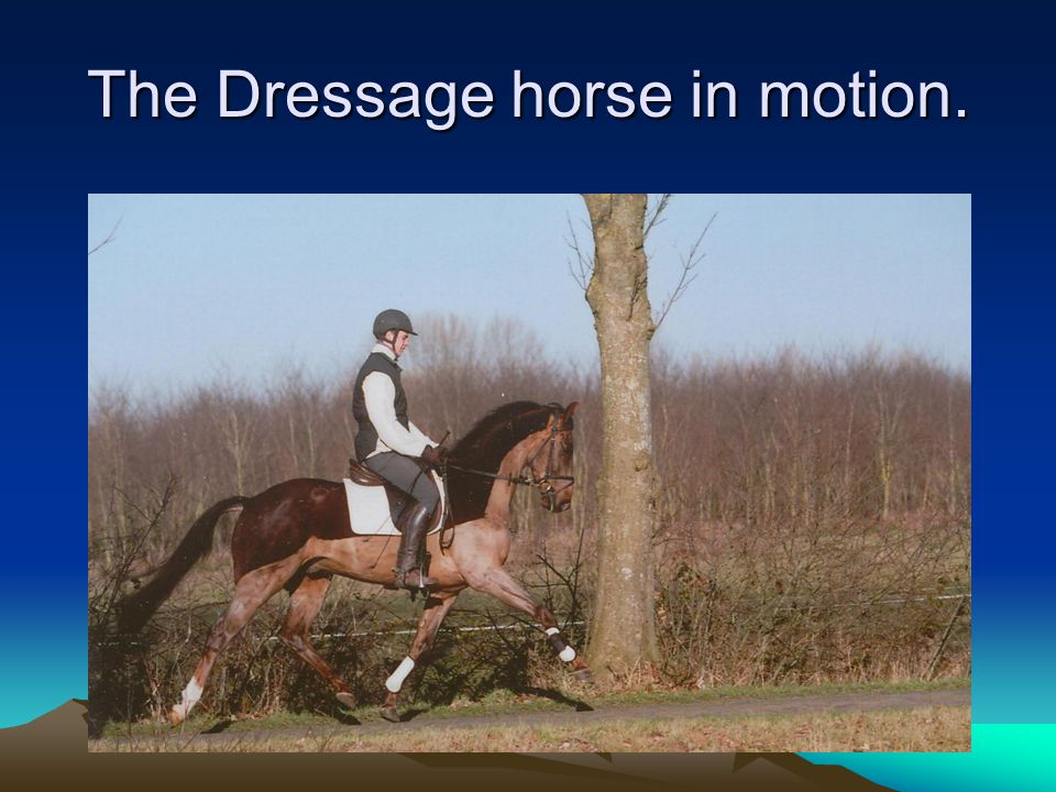 The Dressage horse in motion.