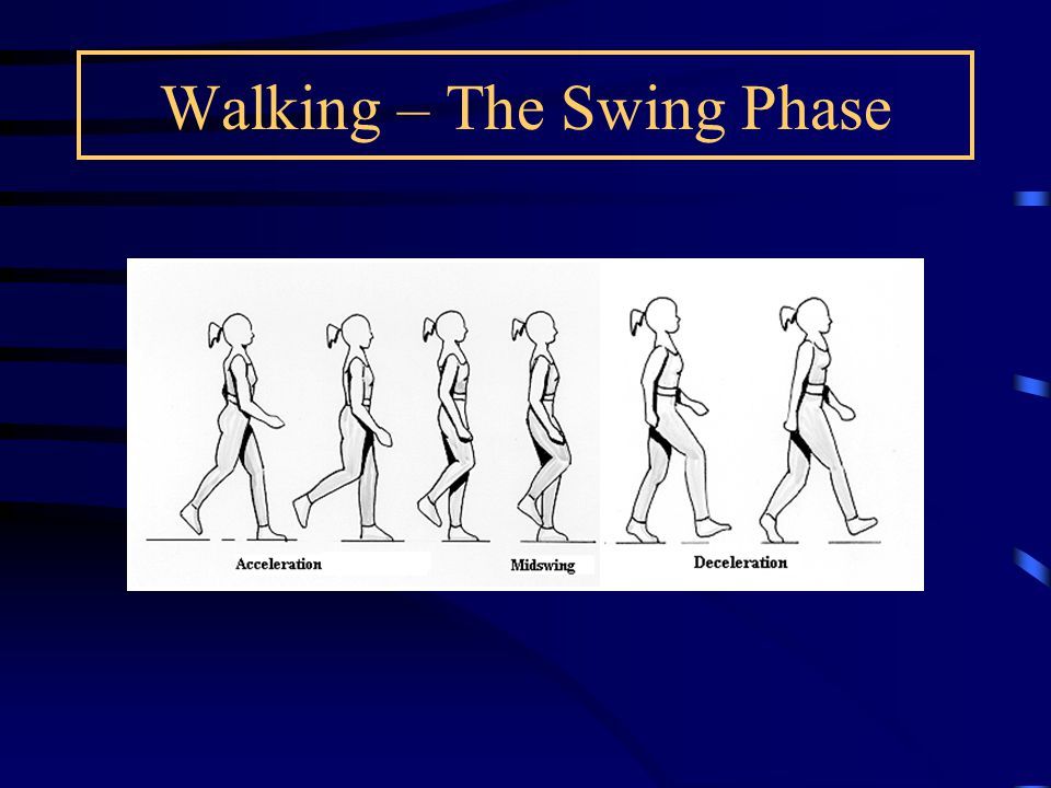 Walking – The Swing Phase