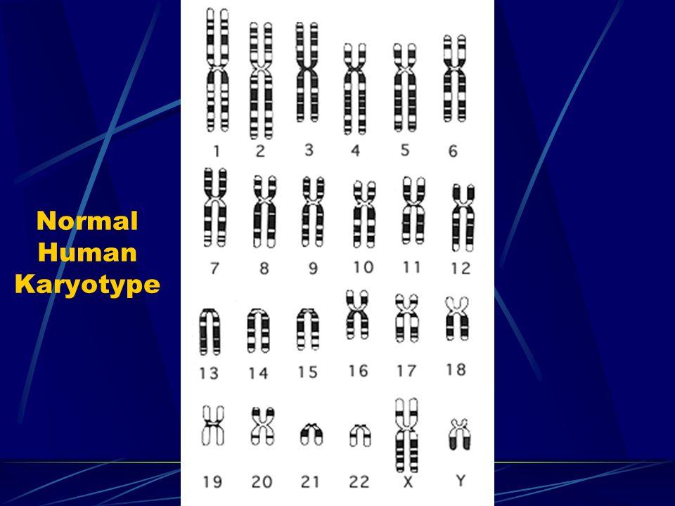 Normal Human Karyotype