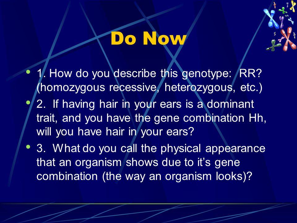 Do Now 1. How do you describe this genotype: RR (homozygous recessive, heterozygous, etc.)