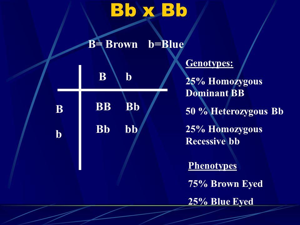 Bb x Bb B= Brown b=Blue B b BB Bb B Bb bb b Genotypes:
