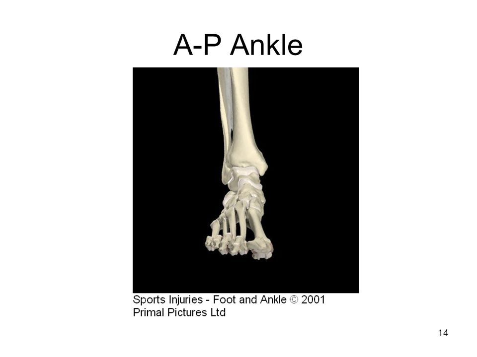 A-P Ankle