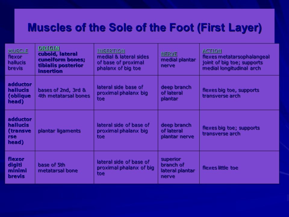 Muscles of the Sole of the Foot (First Layer)