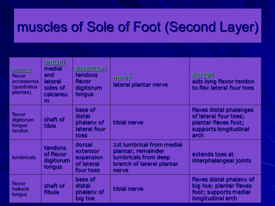muscles of Sole of Foot (Second Layer)