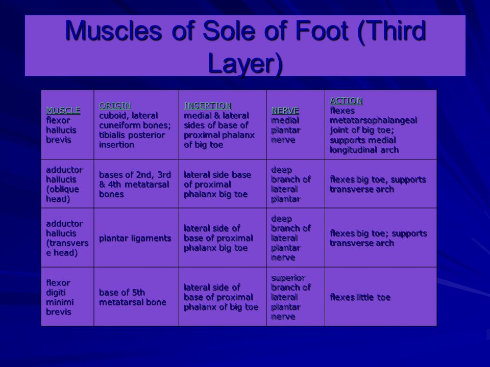 Muscles of Sole of Foot (Third Layer)