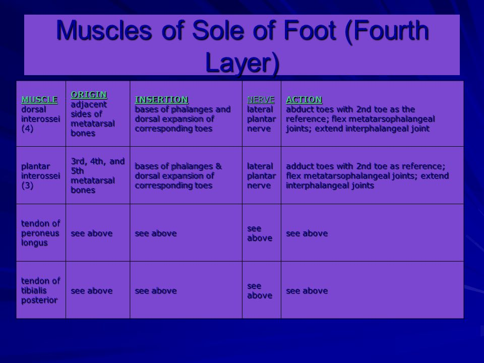 Muscles of Sole of Foot (Fourth Layer)