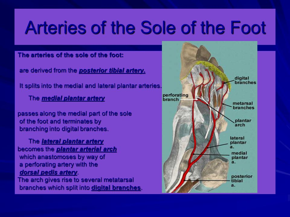 Arteries of the Sole of the Foot