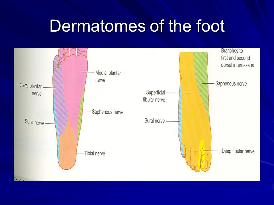 Dermatomes of the foot
