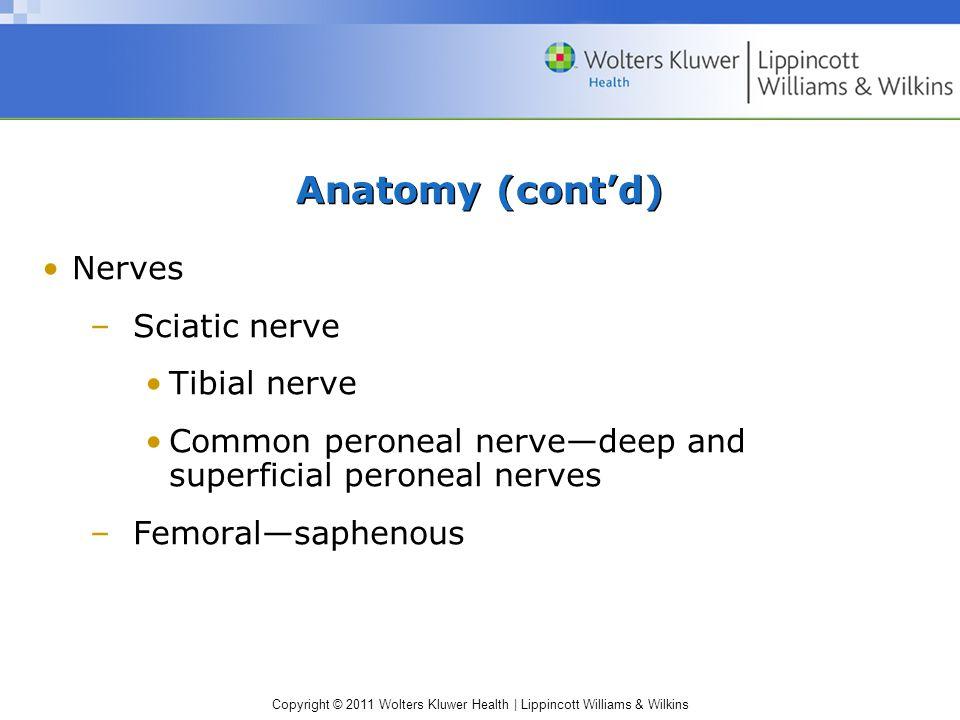 Anatomy (cont'd) Nerves Sciatic nerve Tibial nerve