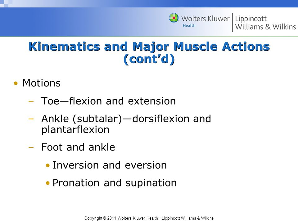 Kinematics and Major Muscle Actions (cont'd)