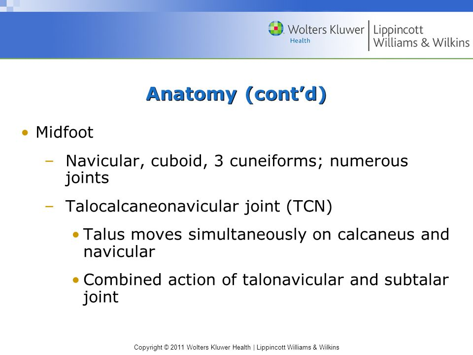 Anatomy (cont'd) Midfoot