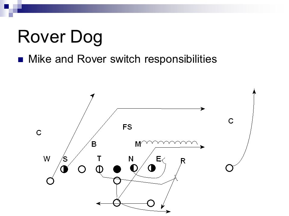Rover Dog Mike and Rover switch responsibilities