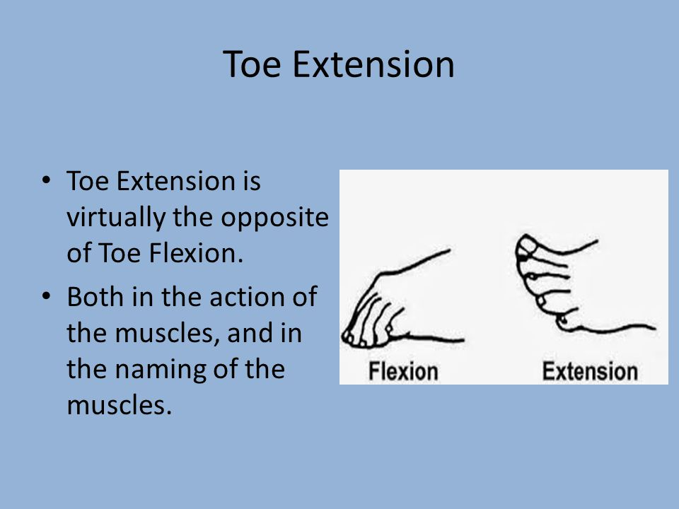 Toe Extension Toe Extension is virtually the opposite of Toe Flexion.