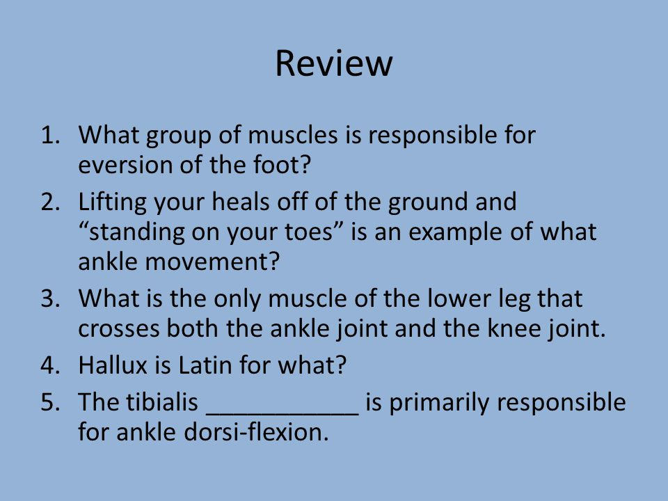 Review What group of muscles is responsible for eversion of the foot