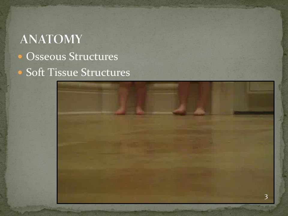ANATOMY Osseous Structures Soft Tissue Structures 3