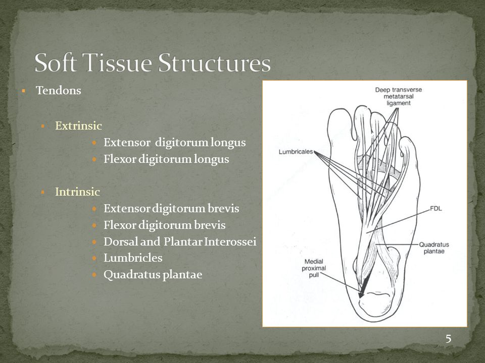 Soft Tissue Structures