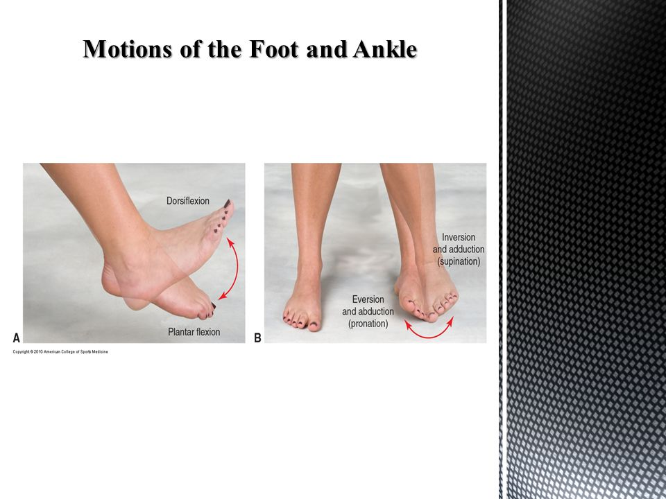 Motions of the Foot and Ankle