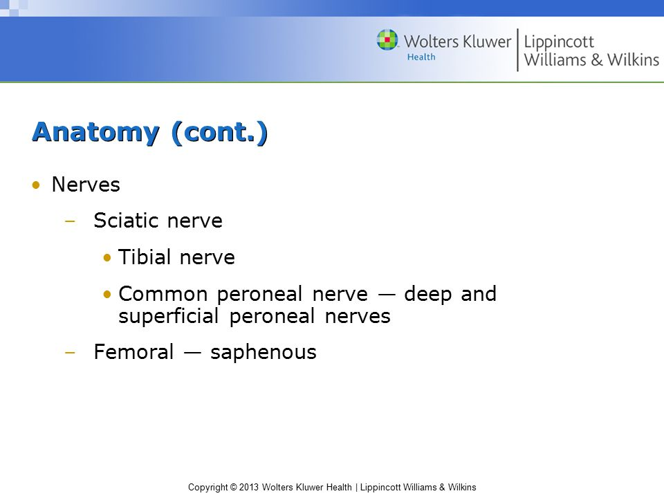 Anatomy (cont.) Nerves Sciatic nerve Tibial nerve