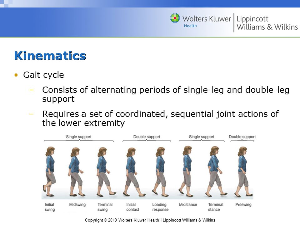 Kinematics Gait cycle. Consists of alternating periods of single-leg and double-leg support.