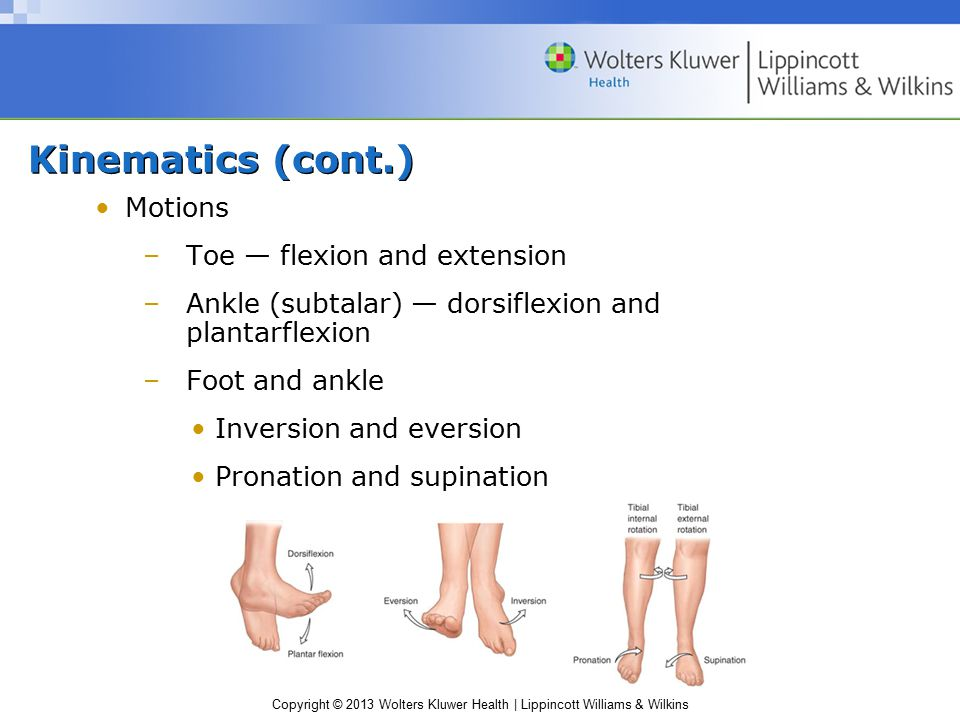 Kinematics (cont.) Motions Toe — flexion and extension