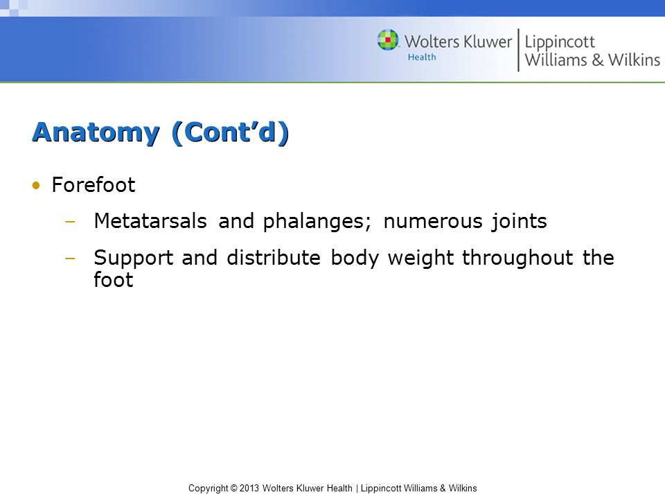 Anatomy (Cont'd) Forefoot Metatarsals and phalanges; numerous joints
