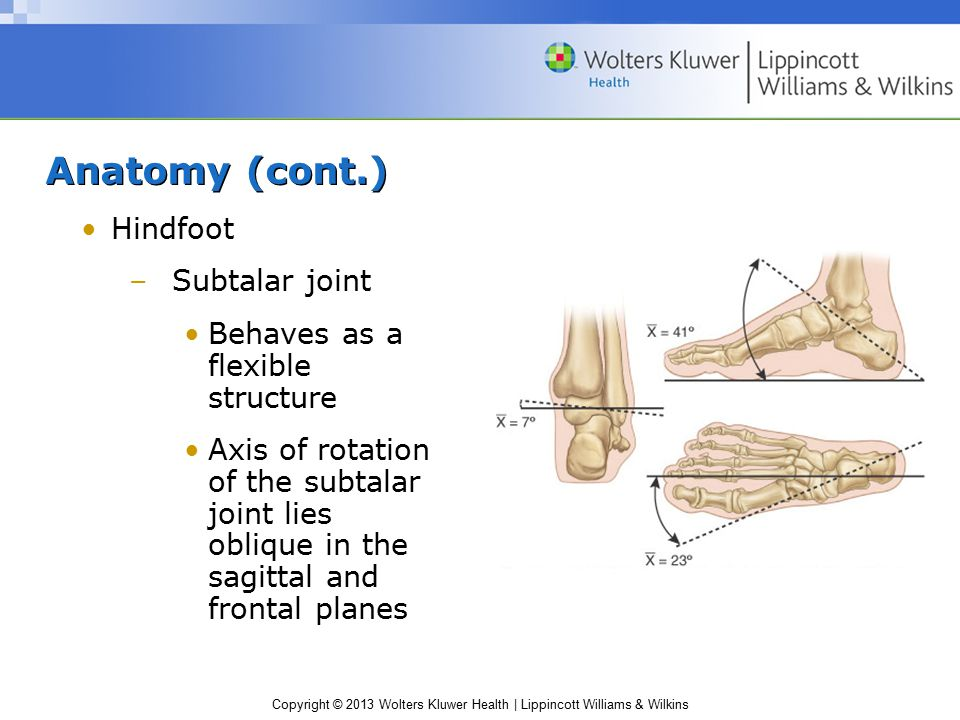 Anatomy (cont.) Hindfoot Subtalar joint