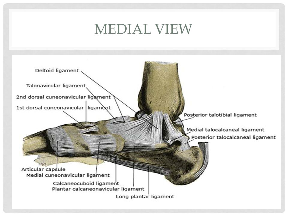 Medial View