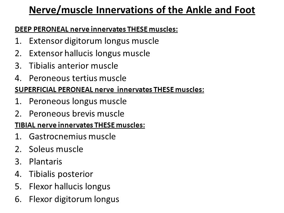 Nerve/muscle Innervations of the Ankle and Foot