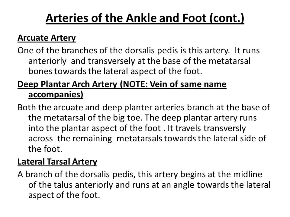 Arteries of the Ankle and Foot (cont.)