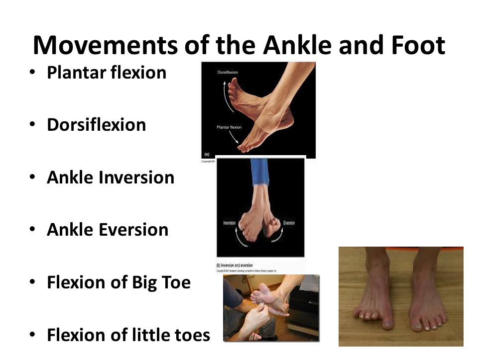 Movements of the Ankle and Foot