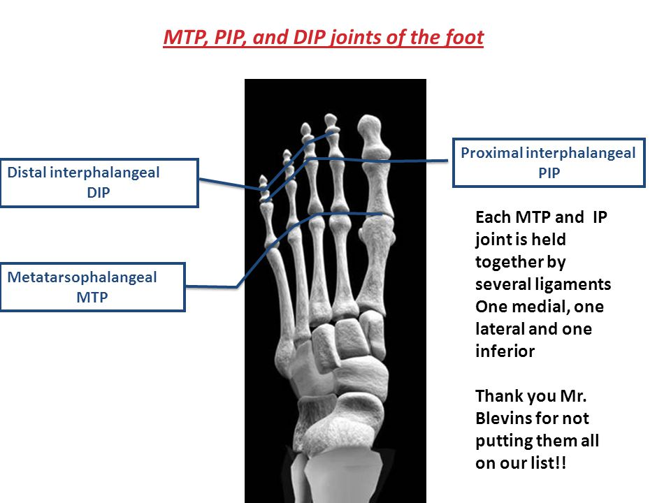 MTP, PIP, and DIP joints of the foot Proximal interphalangeal