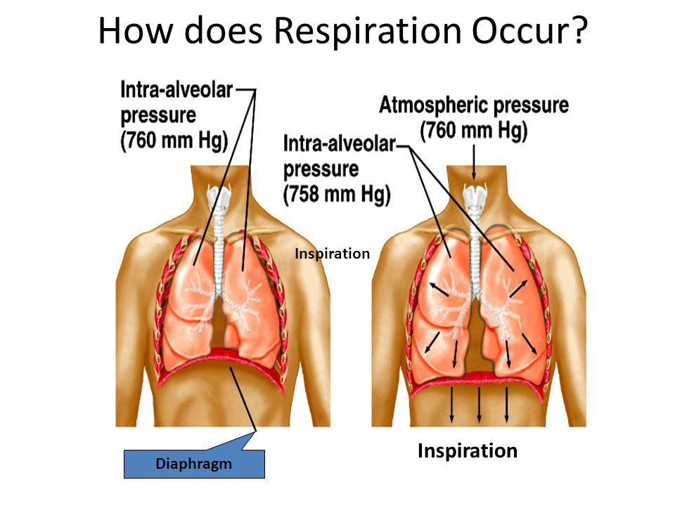 How does Respiration Occur