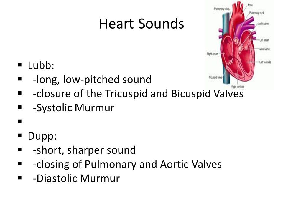 Heart Sounds Lubb: -long, low-pitched sound