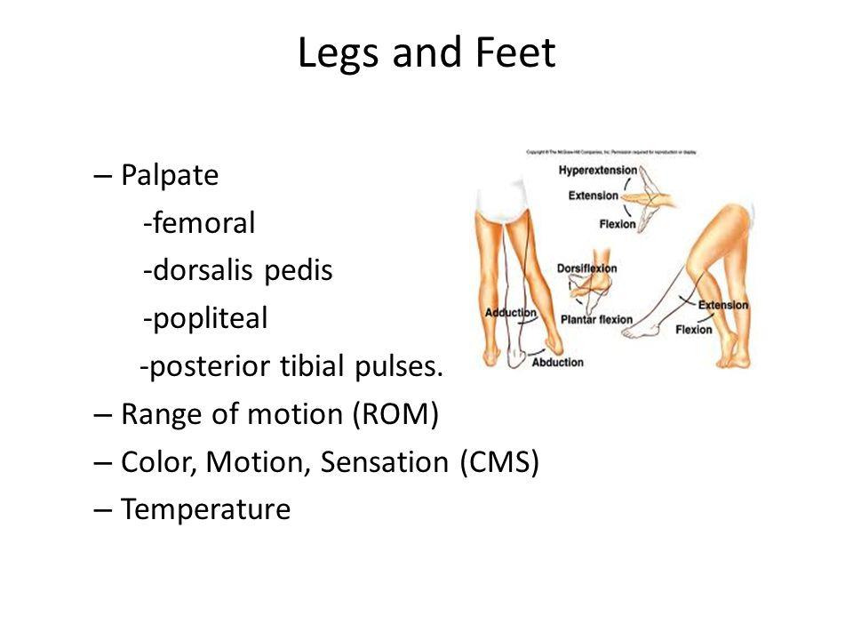 Legs and Feet Palpate -femoral -dorsalis pedis -popliteal