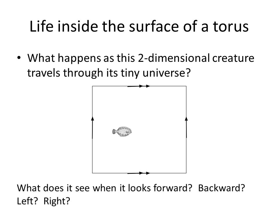 Life inside the surface of a torus