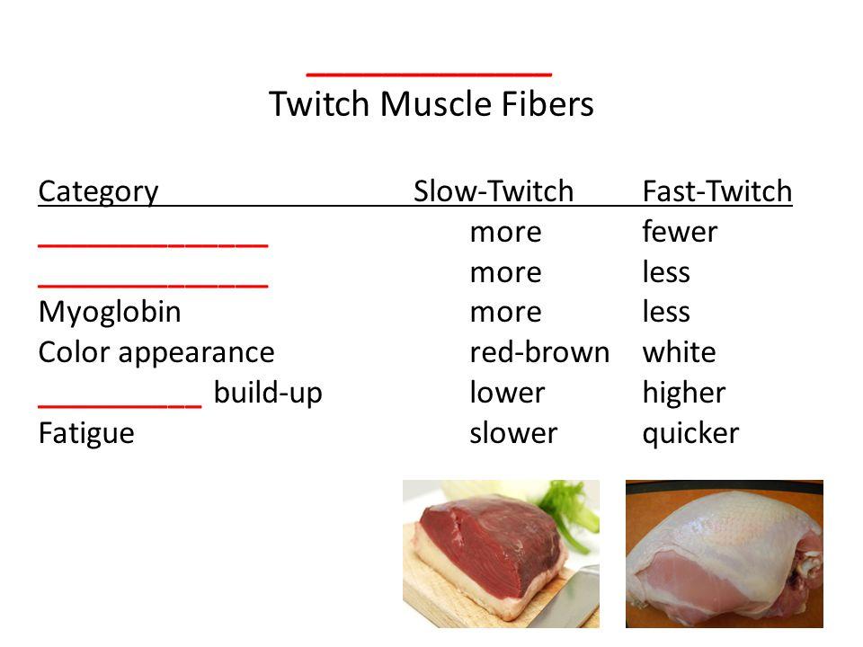 _____________ Twitch Muscle Fibers