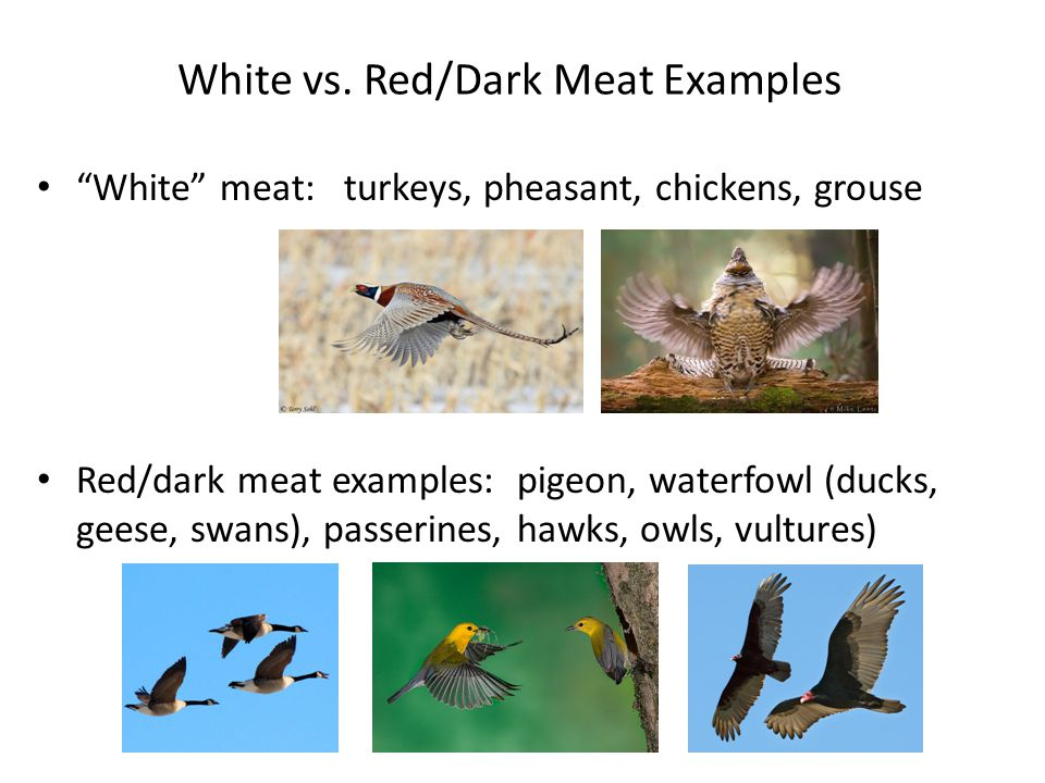 White vs. Red/Dark Meat Examples