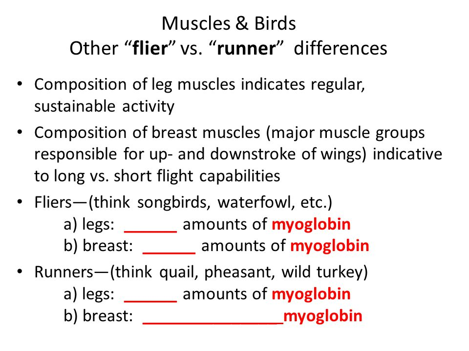 Muscles & Birds Other flier vs. runner differences