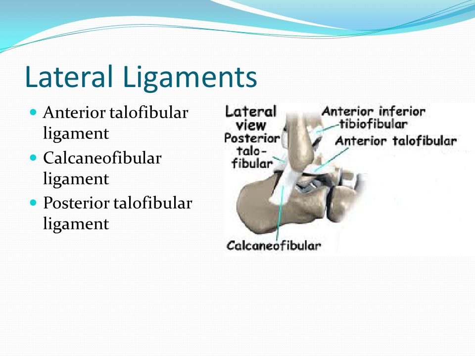 Lateral Ligaments Anterior talofibular ligament