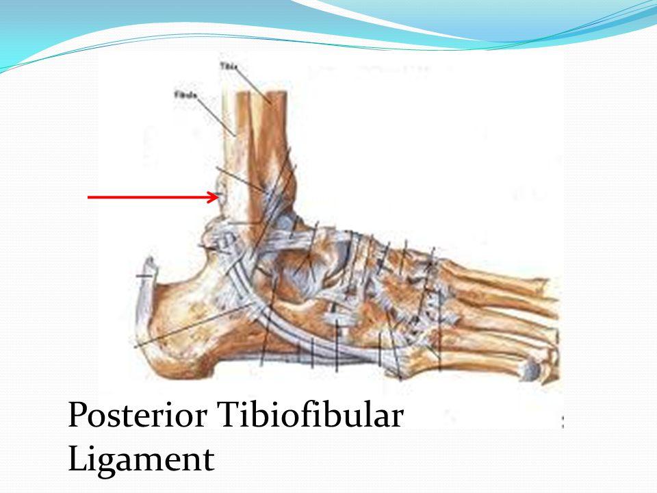 Posterior Tibiofibular Ligament